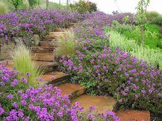 14 Best Mass Plantings Images Plants Garden Garden Design