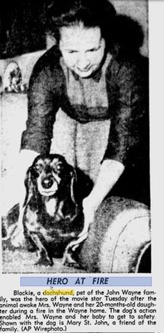 John Wayne's dachshund was just as tough as him!In 1958, Blackie the dachshund saved John Wayne's wife and baby from a house fire. What a hero.