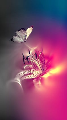 Captivating Light. Tap to see more beautiful Nature iPhone Wallpapers! Butterfly and flowers - @mobile9