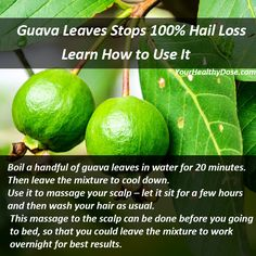 Learn How to Make This Guava Leaves Recipe. #guava #leaves #hair #loss #recipe