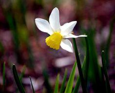 Fleur d'été au Domaine de Maizerets Nature, Photos, Plants, Landscapes, Flowers, Pictures, Flora, Plant, The Great Outdoors