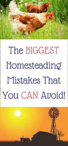 The BIGGEST Homesteading Mistakes That You CAN Avoid. Many homesteaders make the same mistakes but you don't have to - there is a better way.