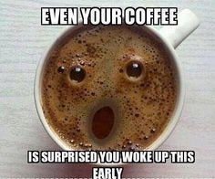 Even You Coffee Is Amazed That You Are Awake This Early - Funny Animal Pictures With Captions - Very Funny Cats - Cute Kitty Cat - Wild Animals - Dogs  If you think my coffee is surprised, you should see my face!