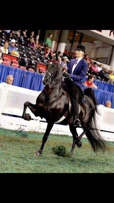 American Saddlebred -Mahvalous In Black #saddlebred #asb #showhorse #horse #worldschampionshiphorseshow #2014 #asbdreams