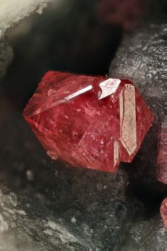 "Eudialyte: ""Raspberry red ,sharp, translucent crystals in the matrix cavities.""  Found in Mont Saint Hilaire, Québec, Canada. 