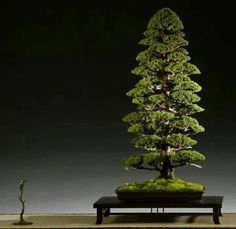 Improving Upon Office Environment Air Excellent With Indoor Crops - Superior For Business Bonsai Bonsai Art, Bonsai Garden, Bonsai Plants, Bonsai Trees, Garden Site, Indoor Bonsai, Succulent Arrangements, Plant Needs, Small Trees