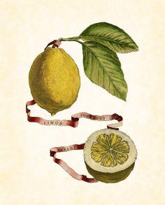 Italian Citrus Plate 2 Series Botanical Art Print Home and Garden Decor Illustration 8 x 10 Art Print. $10.00, via Etsy.