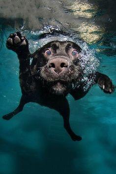 Underwater dog :)