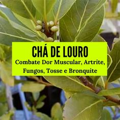 Medicinal Plants, Natural Health, Healthy Recipes, Healthy Food, Juice, Beverages, Medicine, Healing, Herbs