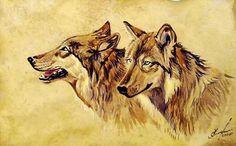 wolf studys