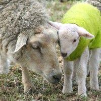 PETA Latino: Derechos para los animales para la comunidad Latina