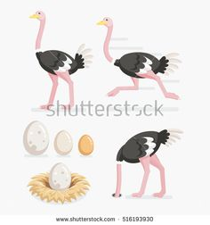 Find Ostrich Ostrich Eggs On Nests Vector stock images in HD and millions of other royalty-free stock photos, illustrations and vectors in the Shutterstock collection. Thousands of new, high-quality pictures added every day. Flat Design Illustration, Forest Illustration, Animal Paintings, Animal Drawings, Character Design Animation, Animal Tattoos, Motion Design, Creative Art, Animal Pictures