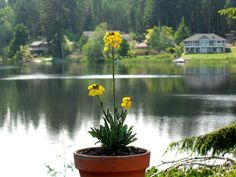 Gardening Lifestyles - http://beautifulgardenideas.com/beautiful-garden-ideas/gardening-lifestyles/
