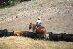 Triple Creek Ranch, Cattle Drive Triple Creek, Cowgirl Pictures, Western Photo, Cattle Drive, Guest Ranch, Ranch Life, Trail Riding, Cowboy And Cowgirl, Life Is An Adventure