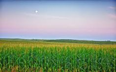iowa agriculture - Google Search