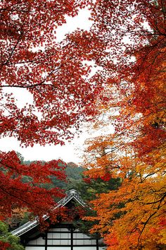 Nanzenji temple #japan #kyoto