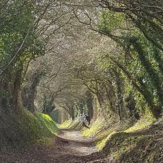 """373 mentions J'aime, 84 commentaires - Carolyn Johnson (@carolynjohnson1807) sur Instagram: """"Boy running down a hill, side to side of course #halnaker #walking #westsussex"""" Potpourri, Landscapes, Walking, Country Roads, Waves, Running, Instagram Posts, Outdoor, Paisajes"""