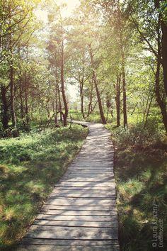 Rhön: Schwarzes Moor, Wegenetz aus Holzbohlen