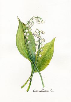 My mother loved lilies of the valley--Watercolor Plants Lily Of The Valley Original by Swiejko on Etsy, $30.00