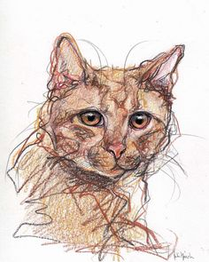 How about a cat? Tormund Pencil, colored pencil and ink