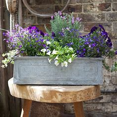 Vintage planter from The Balcony Gardener
