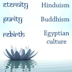 The lotus flower symbolizes beauty and spirituality in several cultures and religions of the world. Lotus Flower Meaning, Blue Lotus Flower, Lotus Flowers, Spiritual Guidance, Spiritual Practices, Spiritual Health, Sketch Quotes, Flower Meanings, Unique Flowers