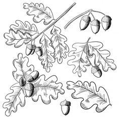 Vector oak leaf and acorn drawing set. Acorn Drawing, Leaf Drawing, Oak Leaf Tattoos, Bullet Journal 2020, Tree Icon, Leaf Illustration, Silhouette Art, Marker Art, Green Man