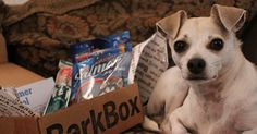 HAPPY HAZEL - A Dog Friendly Lifestyle Blog from Los Angeles: Happy's First BarkBox for his Birthday! :D