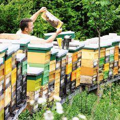 Fas ist Michael von der Bio-#Imkerei #Allesch in St. Anna ob #Reifnitz und seine fleißigen Bienen. 🐝 Sie liefern uns den herrlichen #Bio-#Cremehonig für Deine BROT.ZEIT 🕰. Jetzt in all unseren Cafés - mit #Brotspezialitäten, geschäumter #Butter von der #Kärntnermilch, hausgemachtem Kräuter-#Topfen-Aufstrich und feinster #Kalbsleberstreichwurst vom #Frierss. #brotzeit #emmernussspitz #hadnstoppl #dinkelbrot, #lieblingsbrot #bäckermeister #brothandwerker #brotsommelier #wienerroither #maguat Partner, Anna, Butter, Pranks, Spreads, Bees, Home Made, Things To Do, Simple