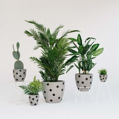 Our hand painted Polka Dot Concrete Planters are available in the following sizes: M - 17cm D x 15cm H (1kg) L - 21cm D x 22cm H (2kg) XL - 28cm D x 26cm H (4.5kg) (These sizes are the 3 smallest planters pictured in the main photo, please contact us for information on the 2 larger sizes)  They come in 8 colour ways (see last photo for options). All of our planters have drainage holes and are best suited for indoor use.  Please bear in mind that as this is a handpainted product, your planter…