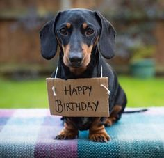 A happy birthday wish from this cute Dachshund would make any birthday special. Free Happy Birthday Cards, Happy Birthday Pictures, Happy Birthday Quotes, Happy Birthday Greetings, Happy Birthday Dachshund, Happy Birthday Puppy, Happy Birthday Animals, Happy Birthday For Her, 9th Birthday