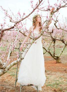almond tree photoshoot - Buscar con Google