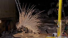 2012 Porcupine detail from larger sculpture. Fairbanks, Alaska