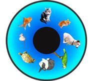 """Early Learning Wheels 6"""" - Family Pets"""