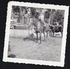 Vintage Antique Photograph Little Boy Riding On Beautiful Horse Equestrian