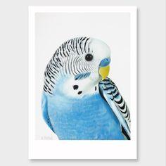 """Wilbur"" Budgie Art Print by Margaret Petchell"