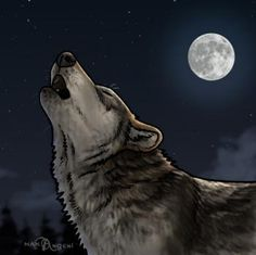 How to Draw Howling Wolves, Howling Wolf, Step by Step, forest animals, Animals, FREE Online Drawing Tutorial, Added by makangeni, March 2, 2013, 3:38:34 pm