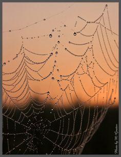 Dew on spider web.