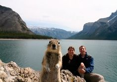 The pioneer of animal-kingdom photobombing: Crasher Squirrel! Click through to see where he's been since he inadvertently added himself to this self-portrait of a couple.