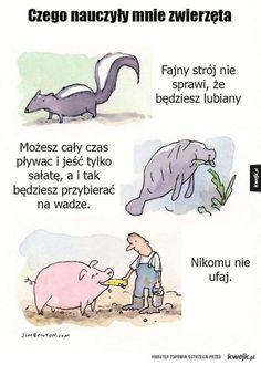Funny Lyrics, Komodo Dragon, Funny Memes, Jokes, Poland, Everything, Haha, Entertaining, Thoughts
