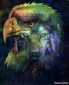 Loup et aigle <3 *****