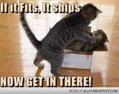 Hilarious Animal Memes - Part 1 (15 pics)