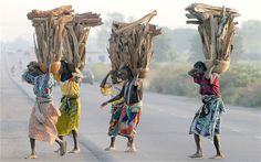Gwari women carry fire wood on their back in Gwagwalada village 35 kilometres from Abuja in the middle belt region of Nigeria in this photog. Nigeria Capital, Hausa Fulani, African Culture, West Africa, South Africa, How To Make Light, Greed, Camel, Instagram Posts
