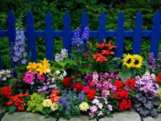 Use yellows, pinks, reds and purples in front of blue picket fence. So pretty & colorful!