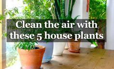 5 Houseplants That Produce Oxygen And Are Impossible To Kill - You want the air in your home purer, but you do not like the air purifiers and seek for natural alternatives? This is the right article for you. We all know that the air purifiers are not always efficient in purifying the air, and that is why we present you some alternatives that not only are efficient, but are also...
