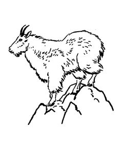 31 Mountain Goat Coloring Pages Ideas Mountain Goat Coloring Pages Coloring Pictures