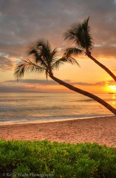 I wonder if the coconut trees are talking about how nice the sunset is...