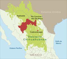 El Desierto Chihuahuense es el más grande en Norteamérica y el segundo con mayor diversidad a nivel mundial. Es un territorio compartido por México y Estados Unidos que se extiende a lo largo de 630,000 km2 y está delimitado por los dos sistemas montañosos más grandes de México: la Sierra Madre Oriental y Occidental