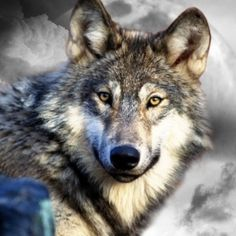 I love wolves. They're my favorite animal.