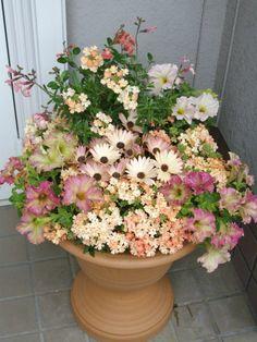 初夏のサーモンピンク寄せ植え